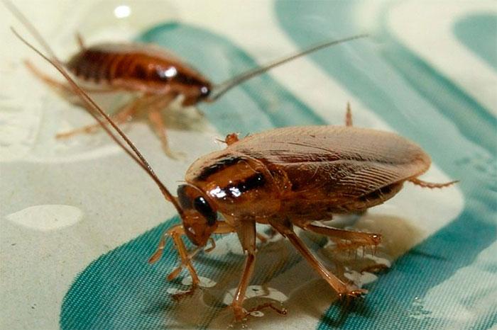 тараканы обработка в Челябинске