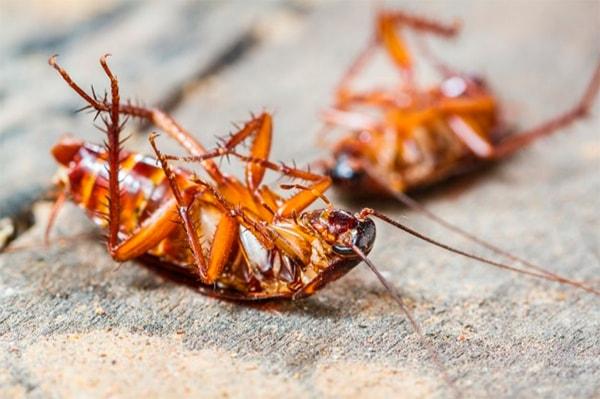 Борная кислота от тараканов рецепты и методики применения